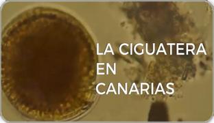 Eurocigua_noticias_destacada