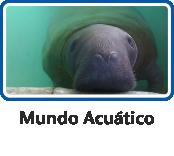 igmacuatico